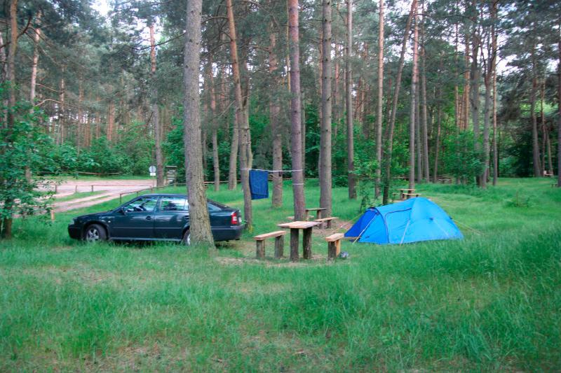 W lesie koło Kosobudza