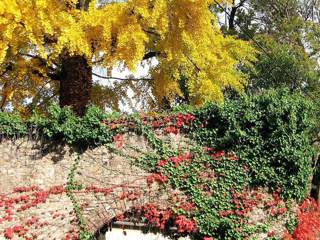 Różnokolorowe liście na drzewach
