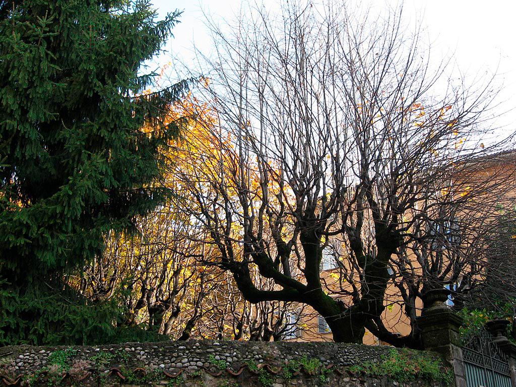 Fantazyjne drzewa