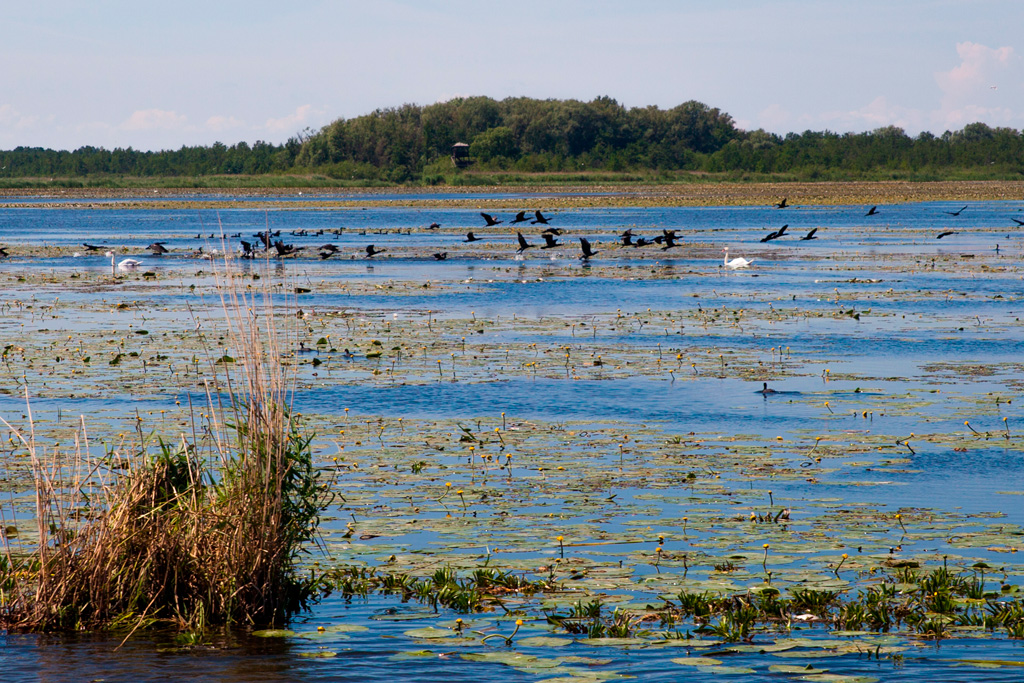 W ptasim rezerwacie