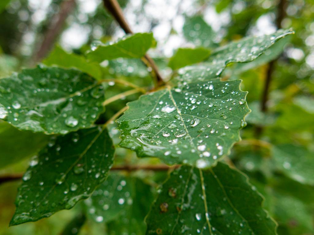 Las po deszczu