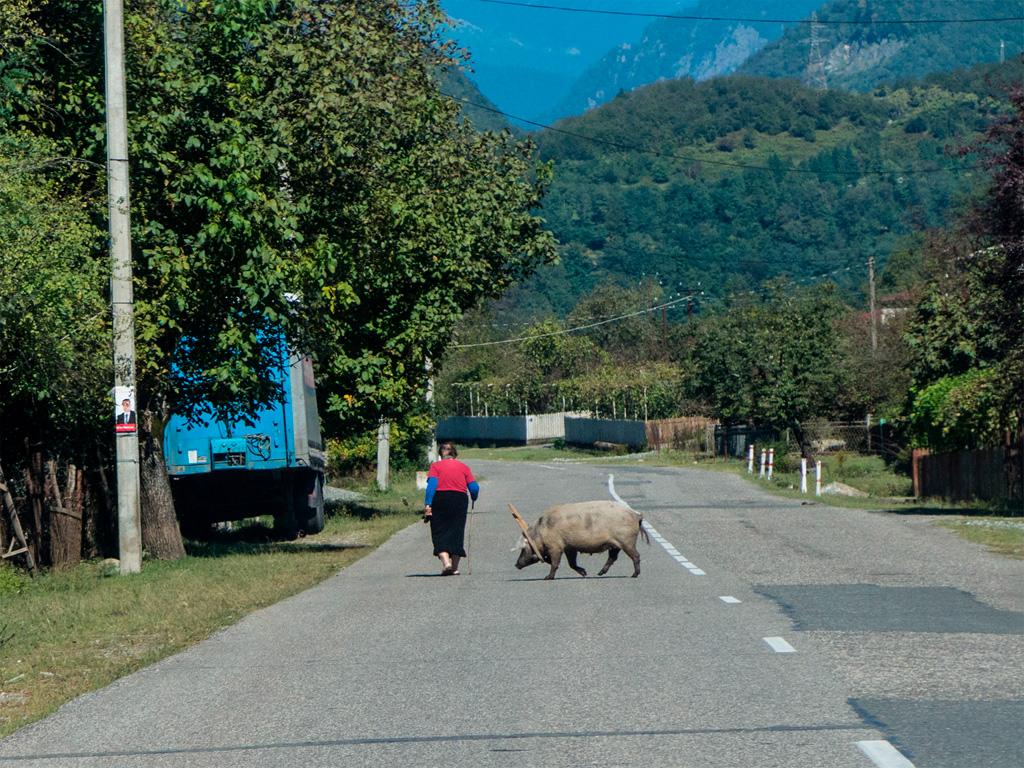 Nie tylko krowy pętają się po jezdni :)
