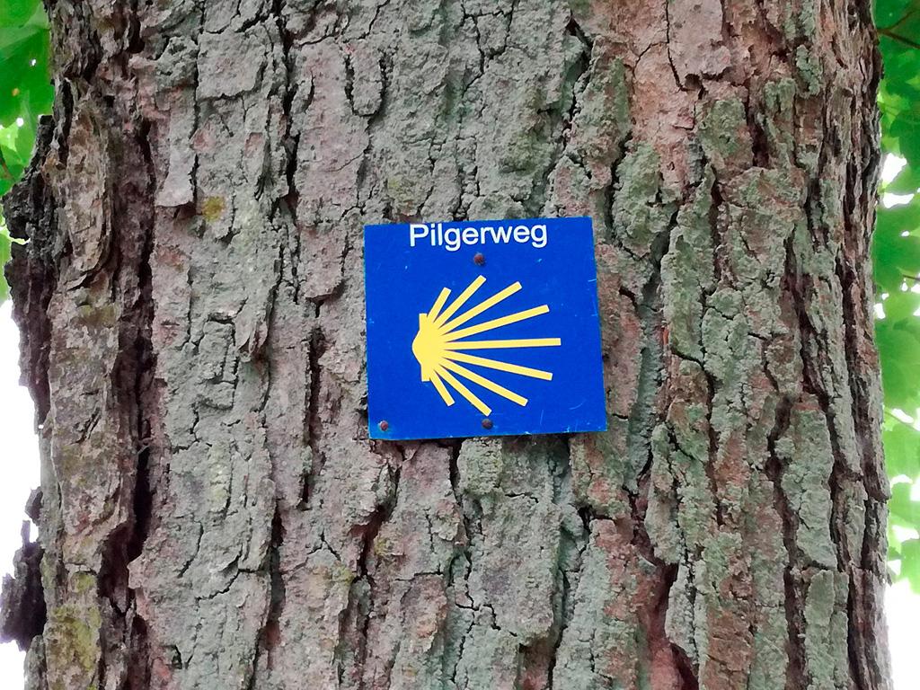 Oznakowanie Camino de Santiango na drzewie