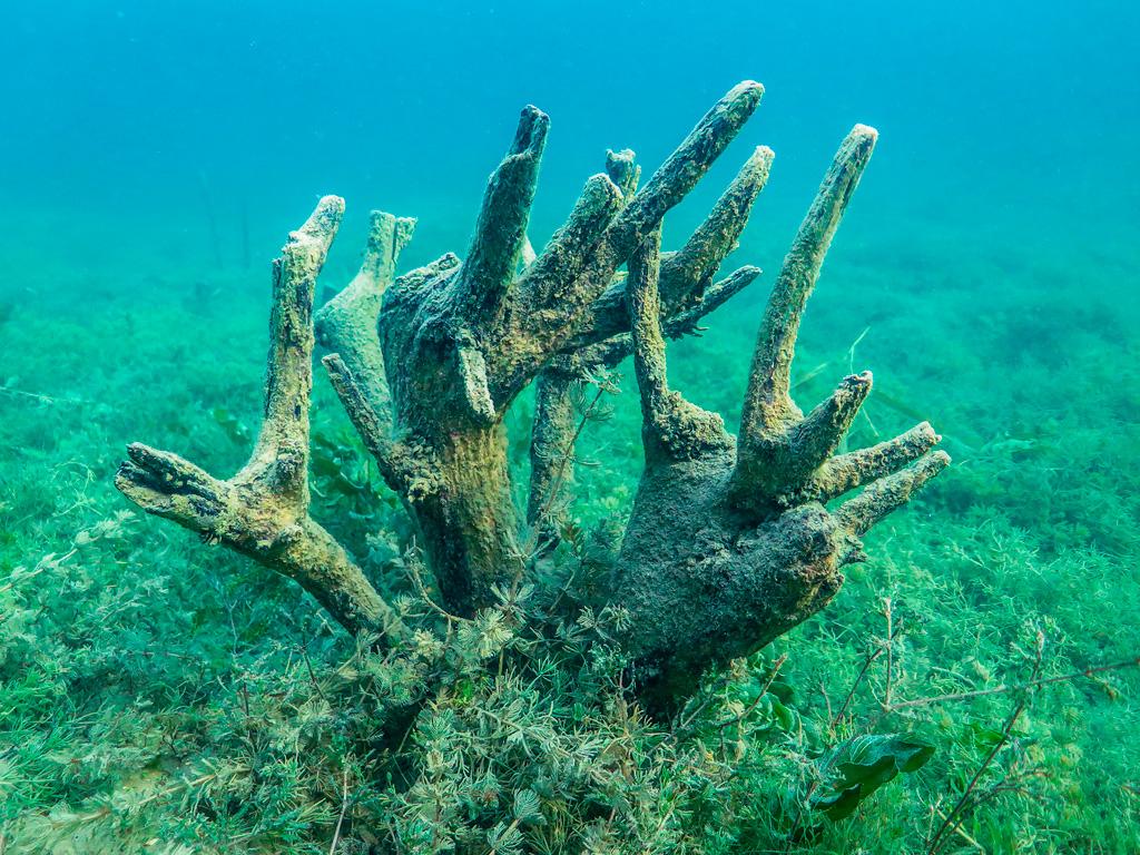 Zatopione korzenie o fantazyjnym kształcie