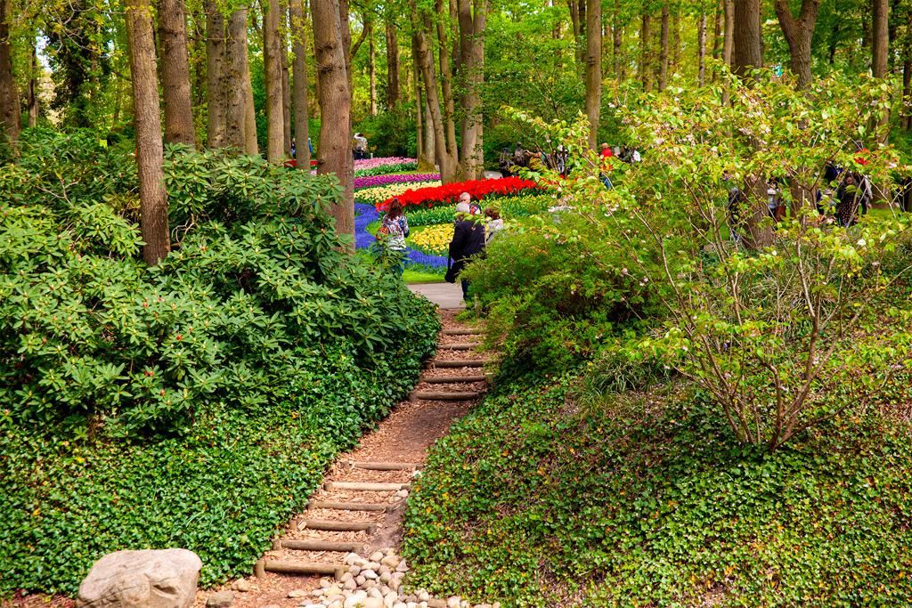 Keukenhof - ścieżka pośród lasu