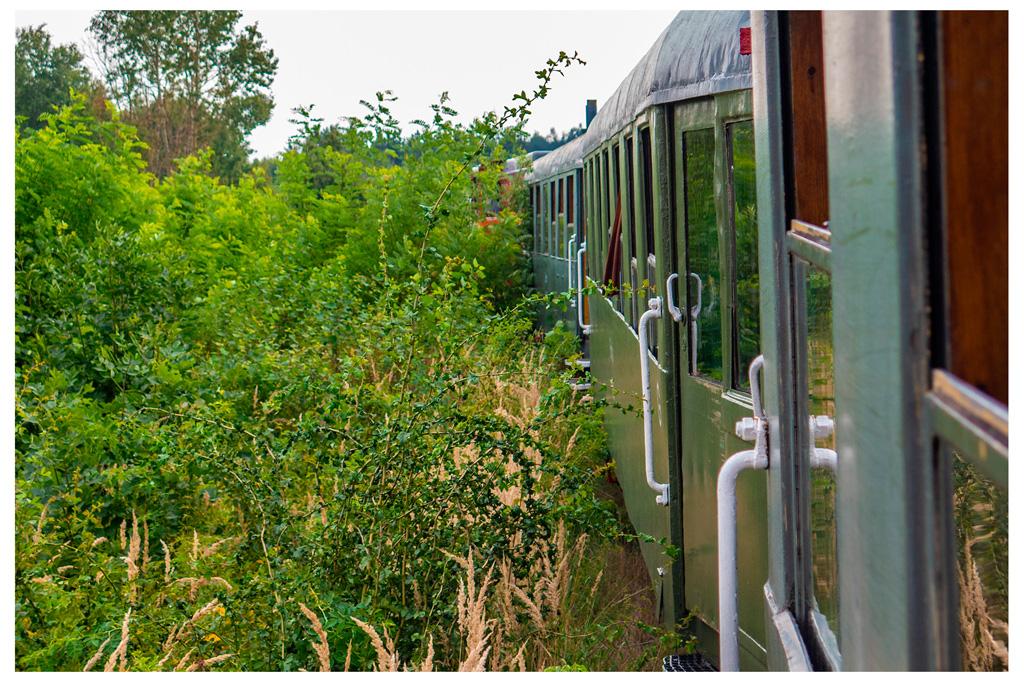 Pociąg retro niekiedy ociera się o krzaki