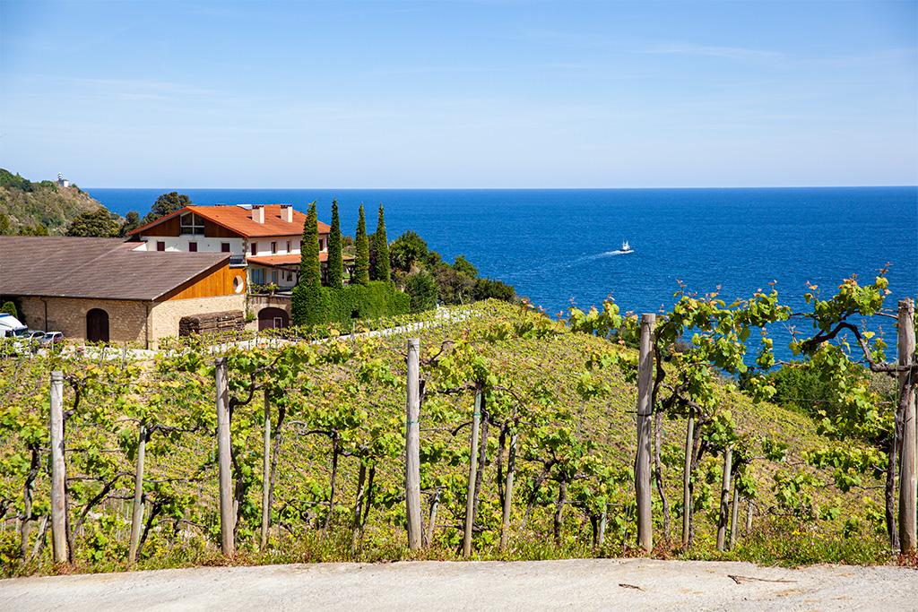 Okolice San Sebastian – winnica nad oceanem