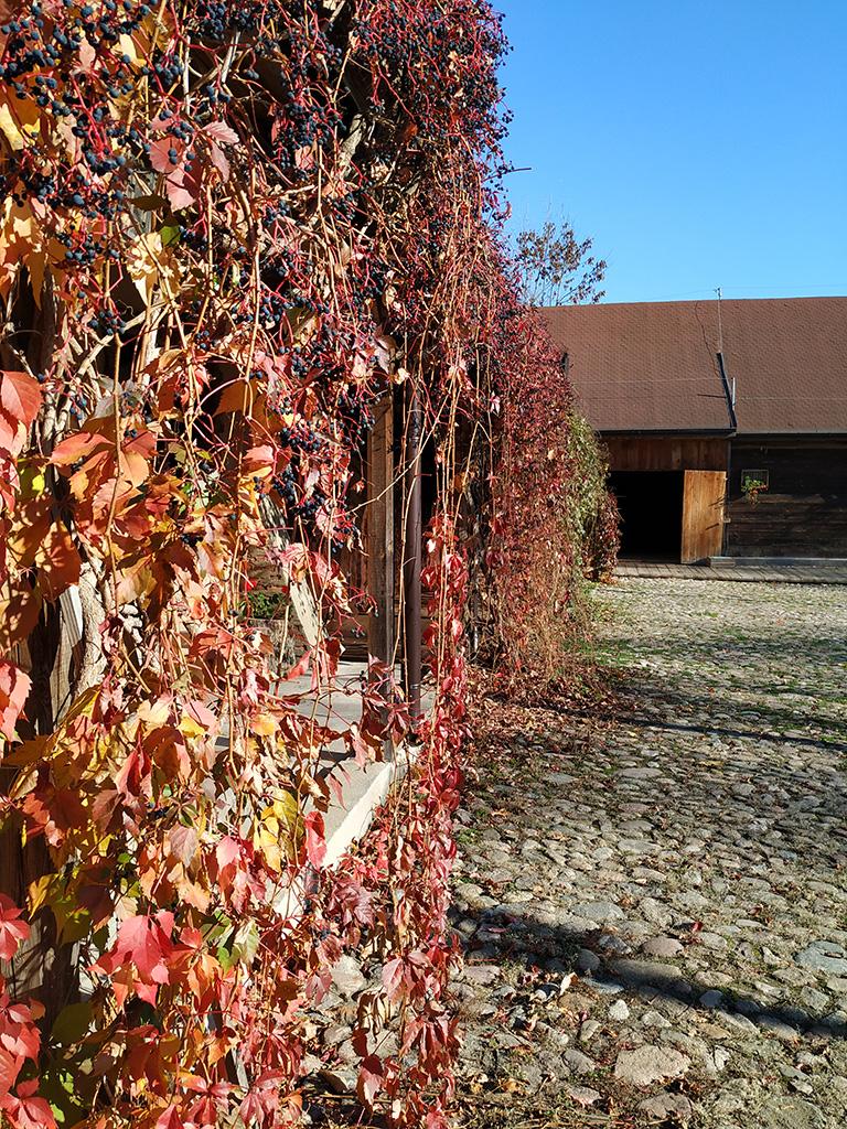 Warsztaty - jesienny krajobraz