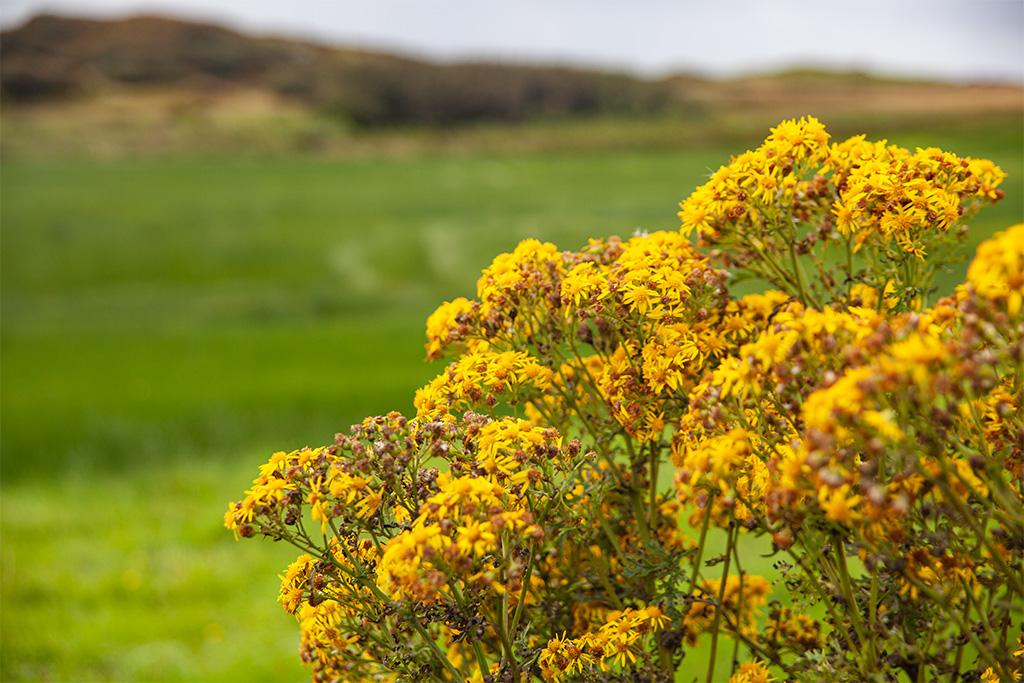 Przyroda na Islay