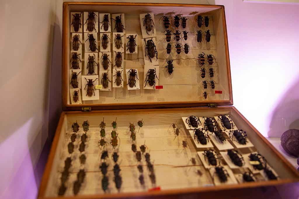 Zbiór owadów