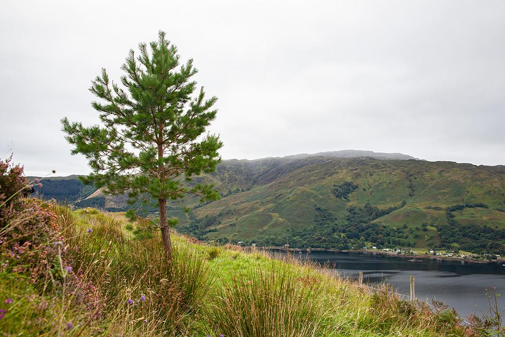 Co zobaczyć w Szkocji? Niesamowite plenery