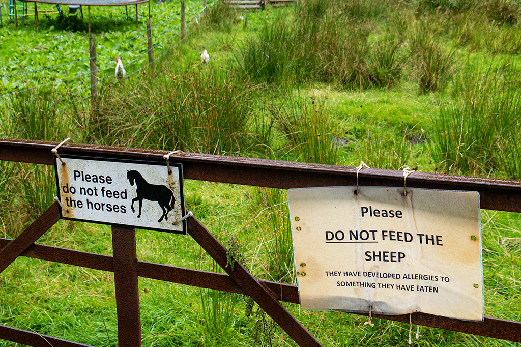 Please do not feed the sheep