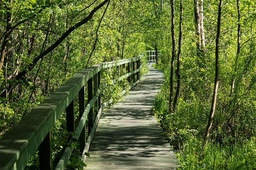 Chodnik w lesie
