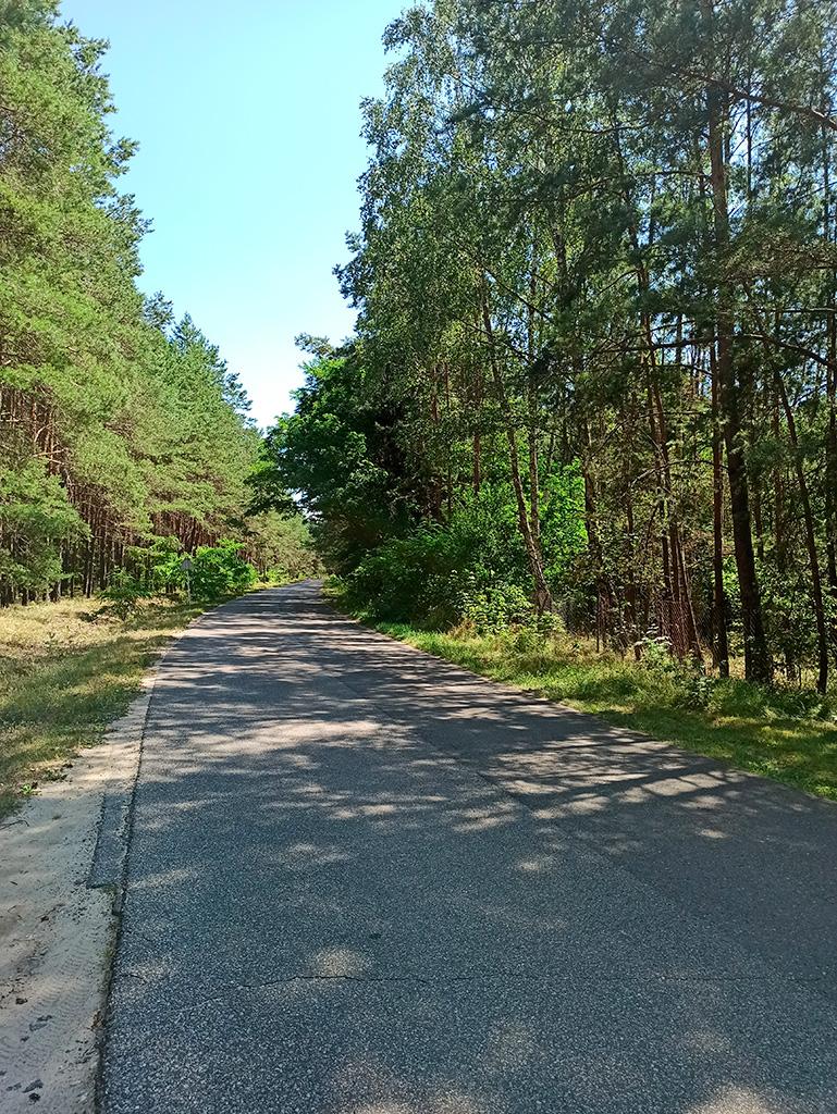 Rowerem nad Liwcem – droga asfaltowa przez las