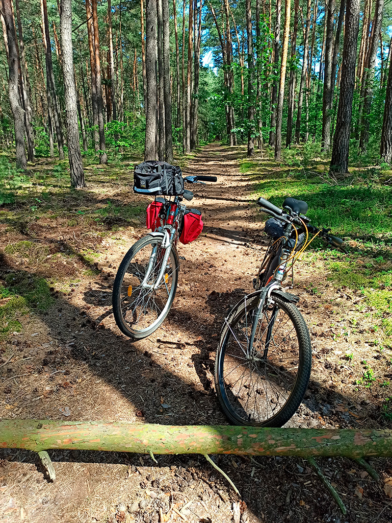 Rowerem nad Liwcem – ścieżka na przełaj przez las