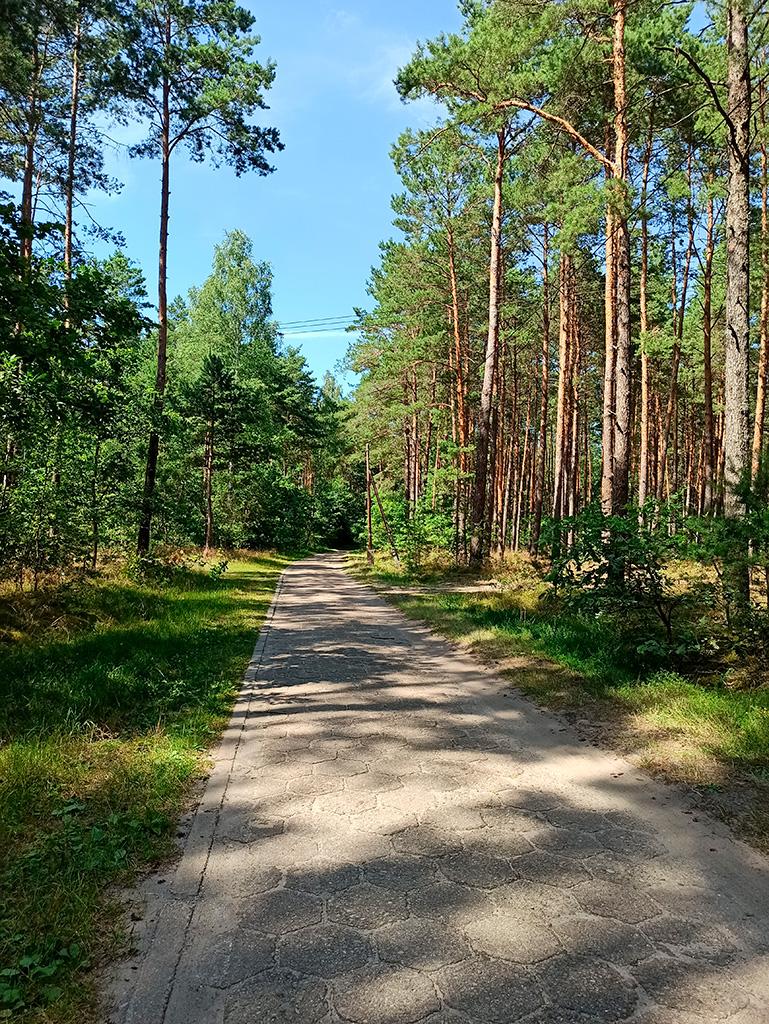 Rowerem nad Liwcem – tym razem przez las wiedzie droga z trylinek