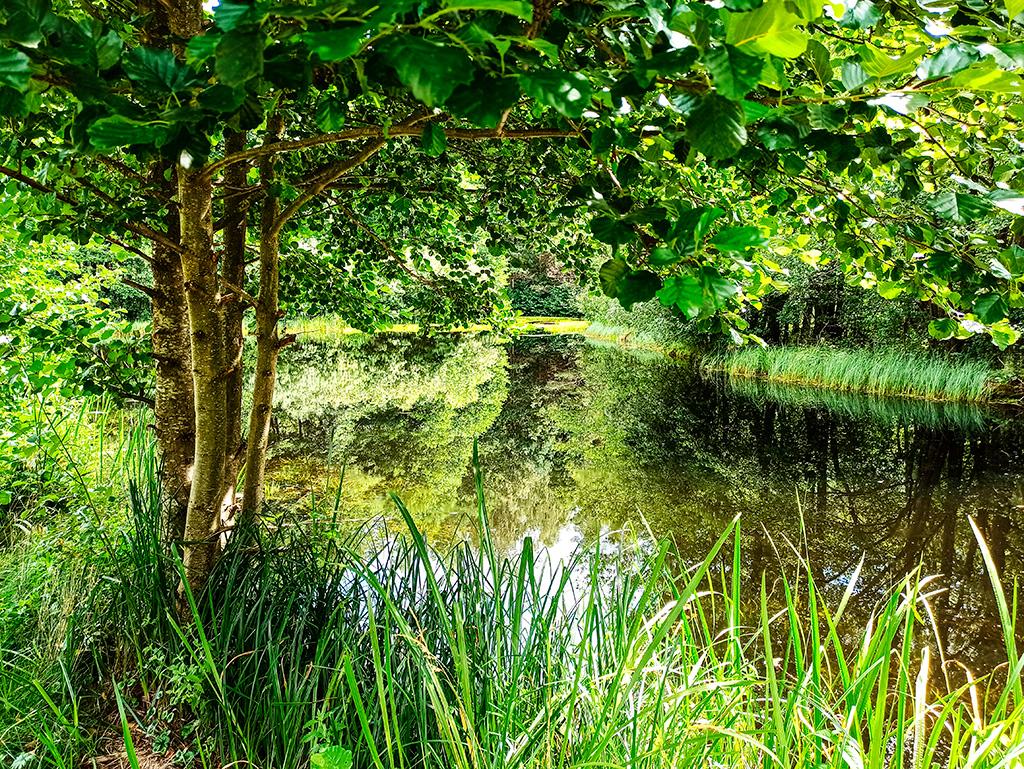 Mazurskie Uroczysko – nieco zarośnięty staw