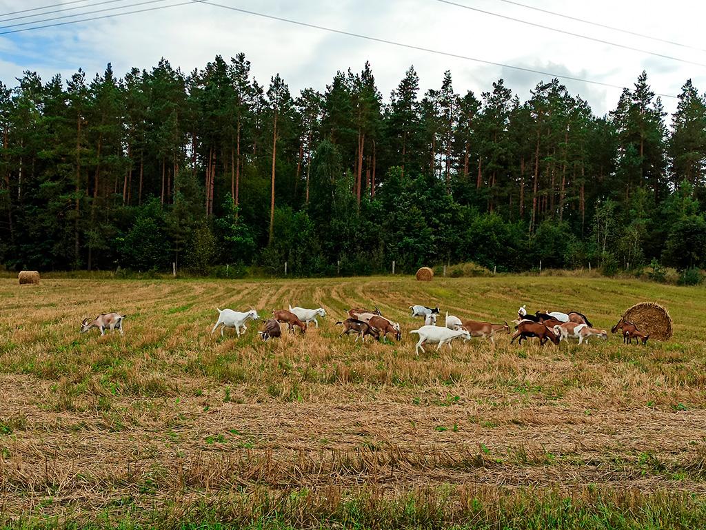 W Serowarze Sokólskim majągdzie pobiegać