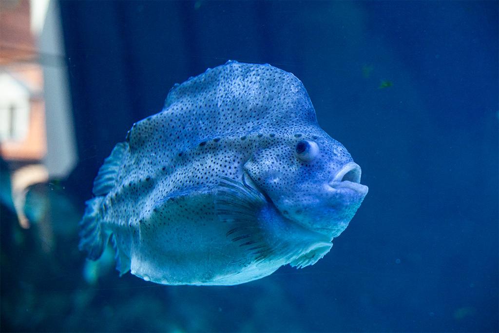 W Oceanarium nie mogło zabraknąć akwariów z przedziwnymi rybami