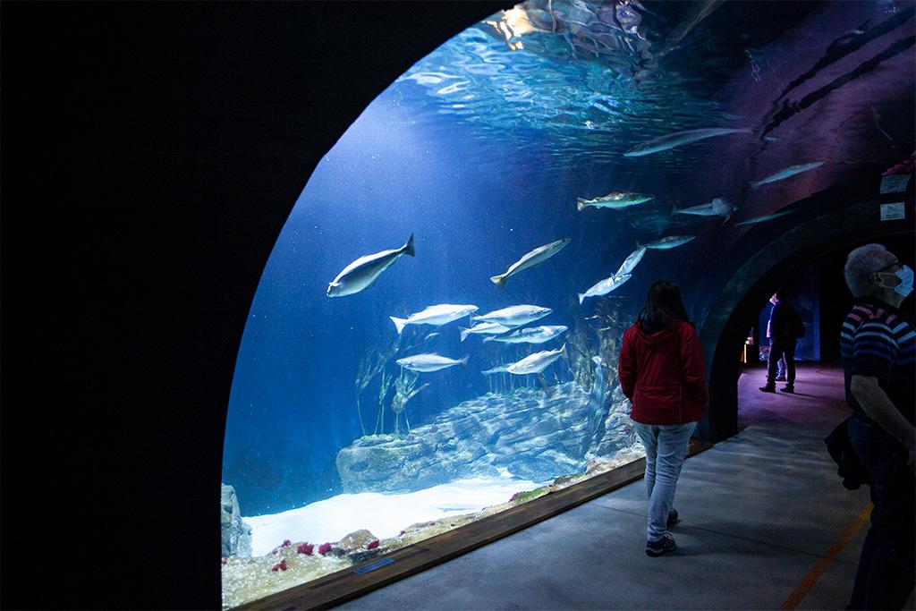 Stralsund –tunel pod akwarium w Ozeaneum